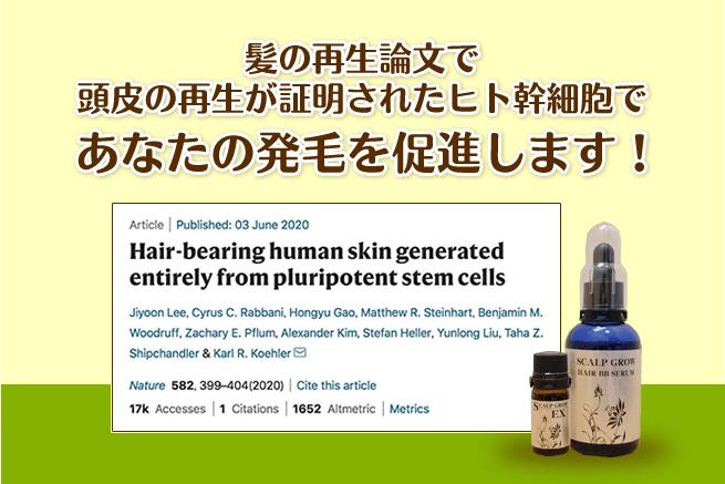 髪の再生論文で頭皮の再生が証明されたヒト幹細胞であなたの発毛を促進します